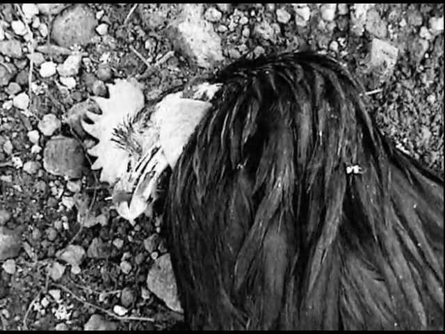 Sonido Gallo Negro - Cumbia Espantamuertos