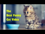 Funny Cat & Cute Kittens Fail Animals Videos Best Funny Kitty Cat Video № 26 | Morsomme Katter № 26