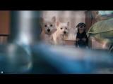 1 клип Веста, Белла и Рик