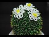 Кактус из бисера. Часть 12. Beaded cactus with real thorns. Мастер-класс.