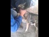 Это как надо было издеваться над собакой, чтоб он так боялся человека!?