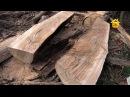 Строительный материал под ногами Обработка сухостоя FORUMHOUSE