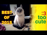 Best funny Cats and Dogs of 2015. Cat fails, Dog fails. Funny pets. Non-stop Too Cute Compilations
