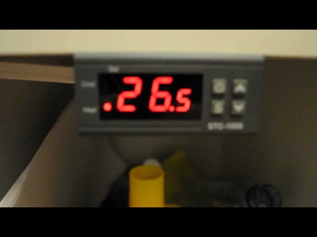 Видеоурок по термоконтроллеру STC-1000.