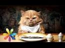 Что нужно есть вашей кошке Все буде добре Выпуск 565 Все будет хорошо 16 03 2015