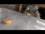 Кот на кухне: голод против совести