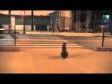 Собака ждет зеленый свет, чтобы перейти дорогу