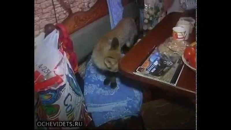 Купили собаку а выросла лиса Bought a dog and rose Fox