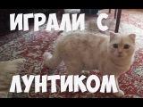 Играли с Лунтиком (котом)