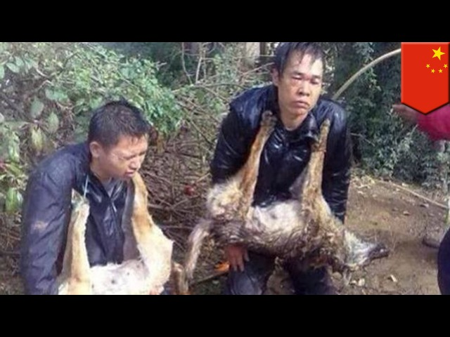 В Китае разъярённая толпа привязала к столбу воров собак