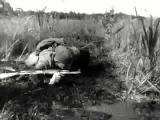 Красная Плесень - Письмо от внука (Фан-видео)