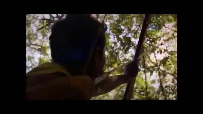 Língua Pirahã - O Código do Amazonas