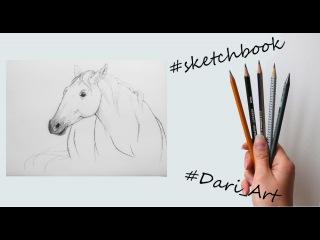 Рисуем скетчи! Как нарисовать лошадь простым карандашом! #Dari_Art