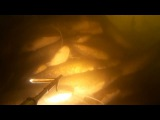 Подводная охота на сома 2015.сомовье безумие ч.3 la pesca per il apnea