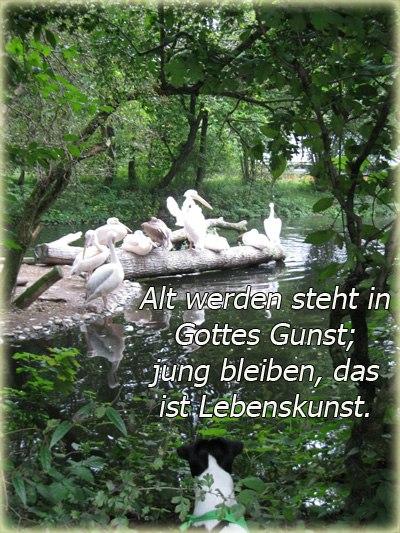 Поздравление мужчин на немецком языке с переводом