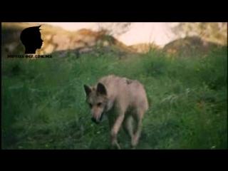 Серебряный волк/Silver Wolf 1999.