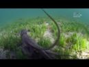 Голубые Багамы (6 серия из 6) 04_Open Water 06_Wonderland