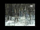 Куреневская трагедия-1961