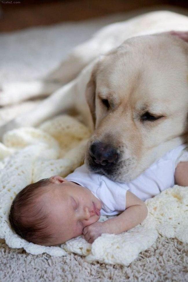 BcAKcZiuaaw - 25 причин, почему детям нужны домашние животные