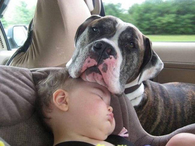 Kgg3 4pYaLw - 25 причин, почему детям нужны домашние животные