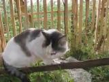 Кот говорит - НЕ ЗНАЮ!