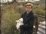 Как выбрать удобрения, редис, цветущие кусты и культиватор