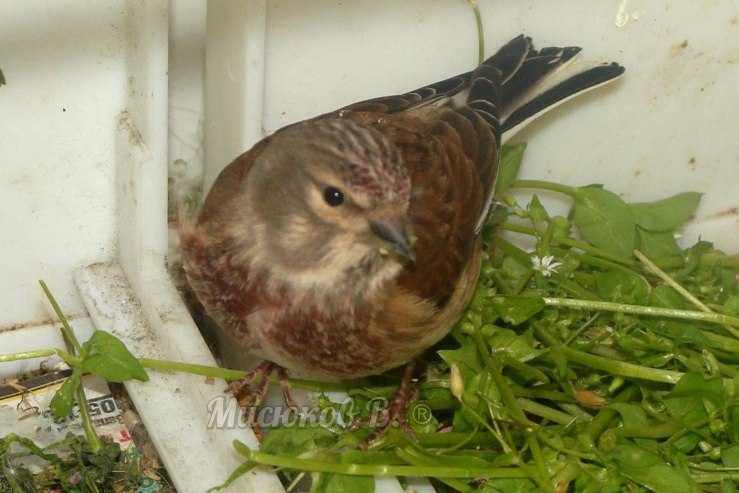 Фотографии моих птиц  - Страница 2 OydGRJxu4rY