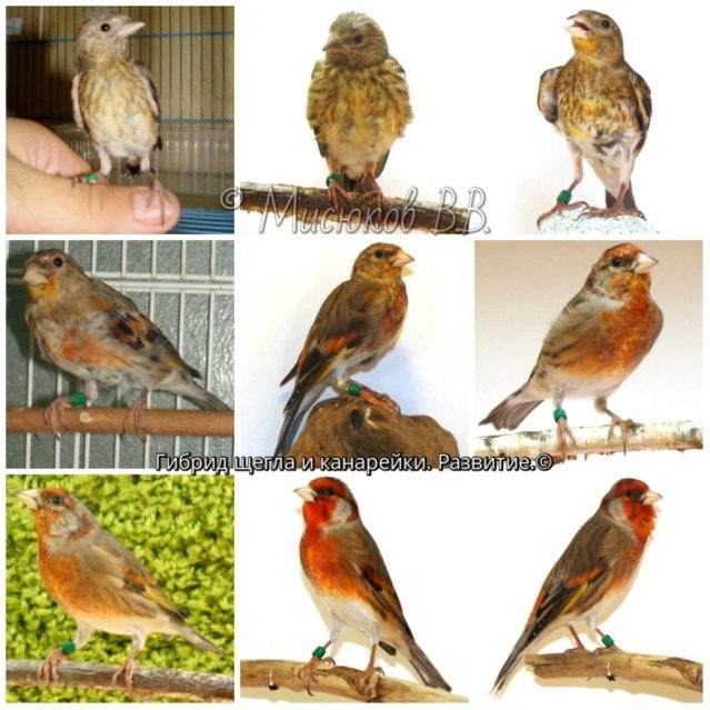 Фотографии моих птиц  - Страница 2 7be-z6p8aNE