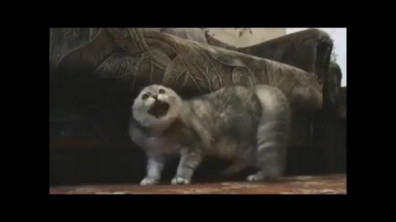 Гроулинг кота прикол новое 2016