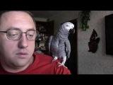 Попугай разговаривает с хозяином.  Говорящий попугай Гриша.