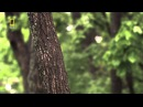 Дикая природа России 5 серия Уссурийский край