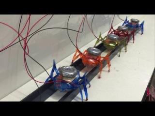 Шесть миниатюрных роботов общими усилиями способны сдвинуть с места 1.7-тонный автомобиль