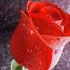 Мир Букетов - искусственные цветы оптом