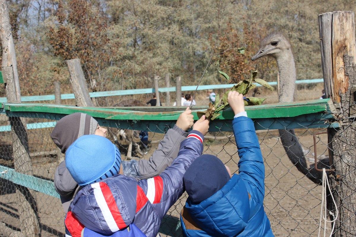 Ветврачи готовят единственную страусиную ферму в Ростовской области к переезду на зиму в Краснодарский край