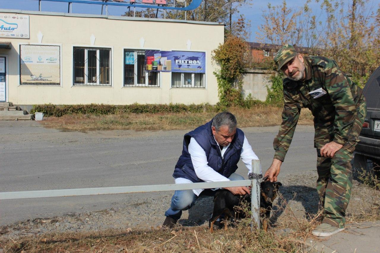 В Ростове бесплатно прививают от бешенства собак и кошек