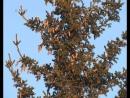Подготовка к Новому году началась: установлена ёлка в Тогуре