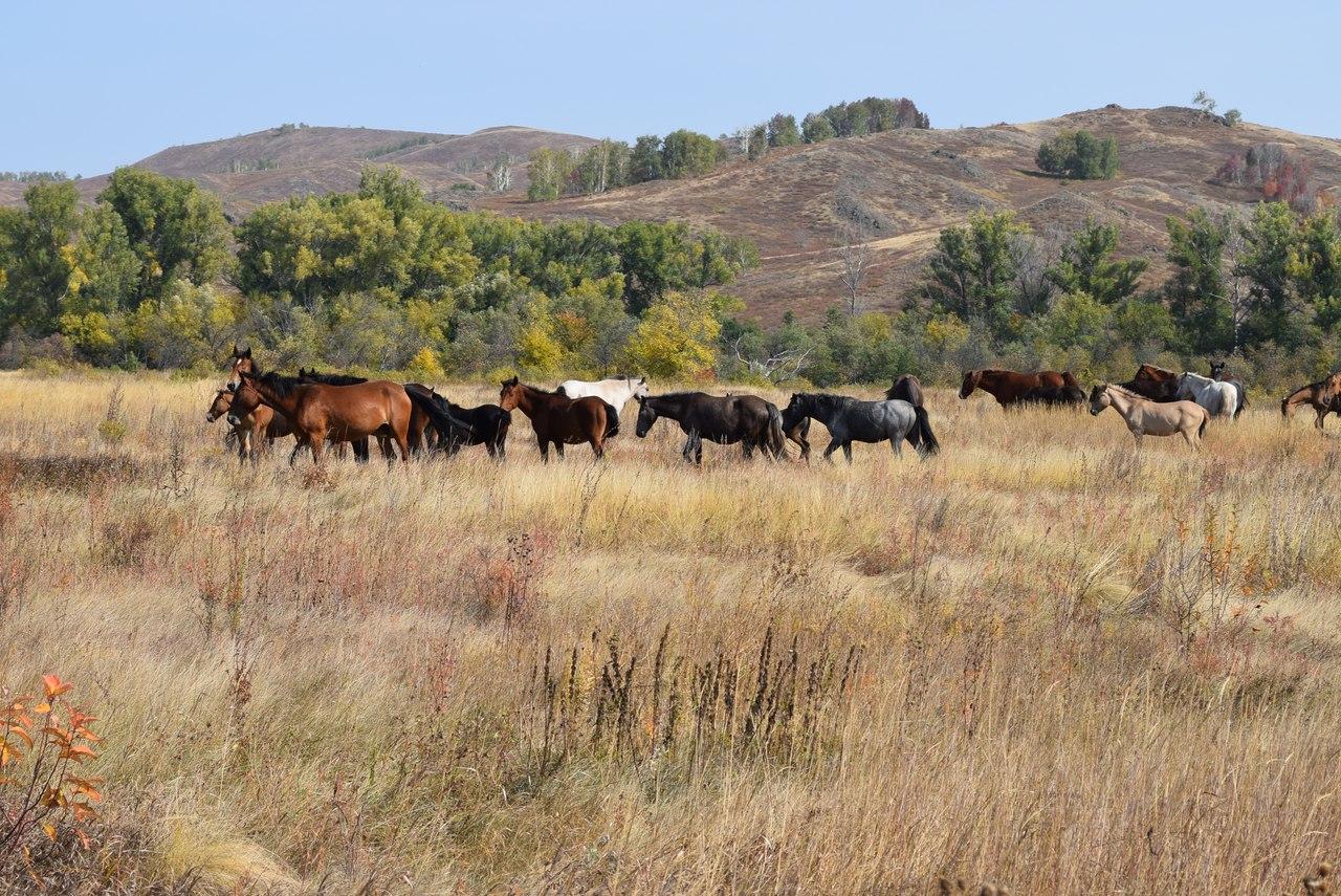 Табун лошадей у подножия г.Ищумган