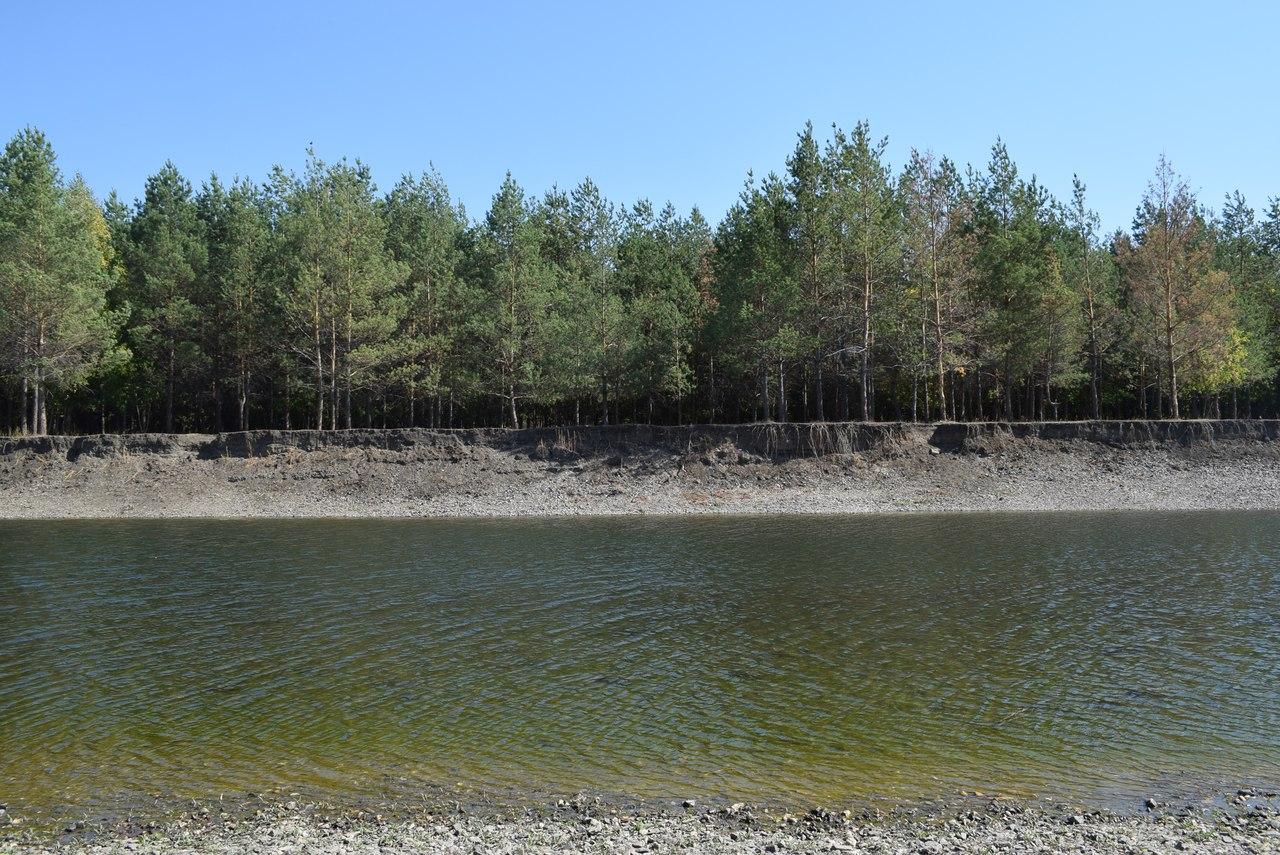 Сосны на левом берегу Сакмары у села Чураево