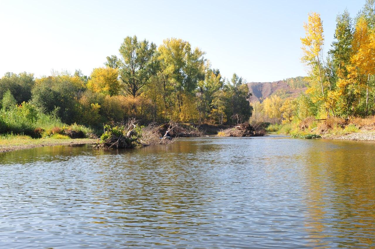Завалы деревьев на реке Сакмара у д. Юмагузино 1-е