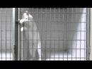 Умный Кот, открывает клетки!