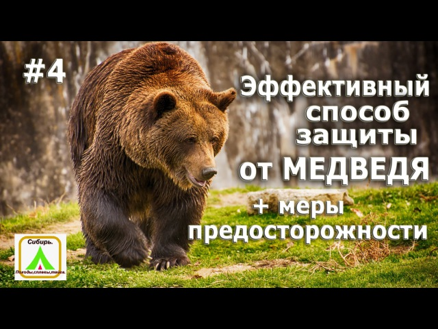 Эфективный способ защиты от медведя. 4 меры предосторожности
