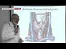 Российский прорыв Ученые напечатали на 3D биопринтере щитовидную железу