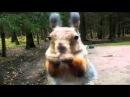 Топ-10 Самых умных животных нашей планеты