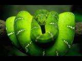 Красота Змей Документальные фильмы Discovery HD