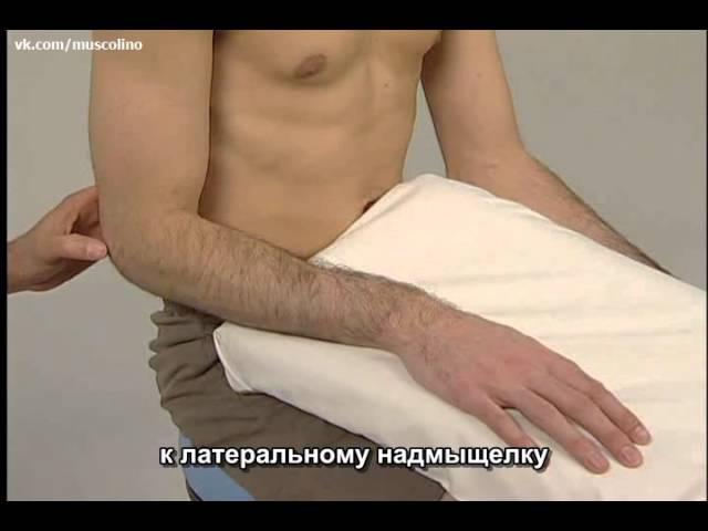 Пальпация мышц предплечья