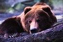 Олег Вещий фото #40