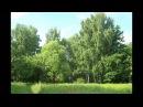 таинственный лес Фридерик Шопен
