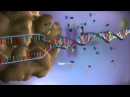 From DNA to protein 3D
