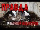 Молочная индустрия за 5 минут RUS
