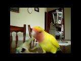 Axe-Wielding Bird ATTACKS!